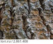Кора дерева - текстура. Стоковое фото, фотограф Чипилко Евгения / Фотобанк Лори