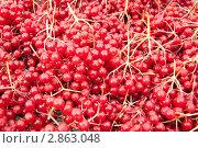Купить «Красная калина», фото № 2863048, снято 2 октября 2011 г. (c) Наталья Двухимённая / Фотобанк Лори