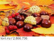 Осенний натюрморт с каштанами. Стоковое фото, фотограф Воробьева Надежда / Фотобанк Лори