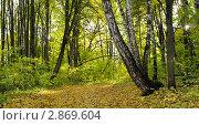 Купить «Осенний лес», фото № 2869604, снято 20 ноября 2018 г. (c) Александр Шуть / Фотобанк Лори