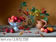 Купить «Осенний натюрморт  с рябиной, шиповником и яблочками», фото № 2872720, снято 15 октября 2011 г. (c) Julia Ovchinnikova / Фотобанк Лори