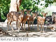 Купить «Молодые олени», фото № 2879072, снято 12 сентября 2010 г. (c) Наталия Македа / Фотобанк Лори
