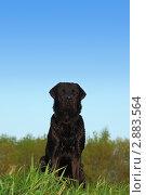 Купить «Черный лабрадор ретривер сидит на лугу», фото № 2883564, снято 20 июля 2018 г. (c) Losevsky Pavel / Фотобанк Лори