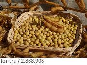 Купить «Семена сои в плетеной корзинке», фото № 2888908, снято 16 октября 2011 г. (c) Anatolii Boida / Фотобанк Лори