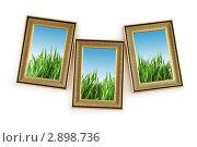 Купить «Рамки для фото с изображением зеленой травы на фоне неба», фото № 2898736, снято 24 декабря 2010 г. (c) Elnur / Фотобанк Лори