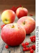 Купить «Красные яблоки и калина», фото № 2899296, снято 23 октября 2011 г. (c) Марина Сапрунова / Фотобанк Лори