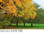 Купить «Листья каштана осенью», эксклюзивное фото № 2916748, снято 16 октября 2011 г. (c) Алёшина Оксана / Фотобанк Лори