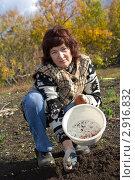 Купить «Посадка чеснока», фото № 2916832, снято 15 октября 2011 г. (c) Акиньшин Владимир / Фотобанк Лори
