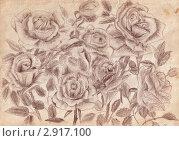 Купить «Букет роз, рисунок карандашом на старой бумаге», иллюстрация № 2917100 (c) Черкинская Юлия / Фотобанк Лори