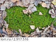 Листва на мху. Стоковое фото, фотограф Щербак Евгений Леонидович / Фотобанк Лори