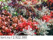 Купить «Цветочная клумба», фото № 2922380, снято 19 августа 2011 г. (c) Юрий Брыкайло / Фотобанк Лори