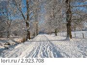 Купить «Солнечная зимняя аллея в лесу», фото № 2923708, снято 19 декабря 2010 г. (c) Татьяна Кахилл / Фотобанк Лори