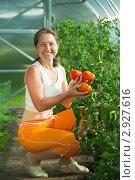 Купить «Пожилая женщина с урожаем помидоров», фото № 2927616, снято 26 июня 2010 г. (c) Яков Филимонов / Фотобанк Лори