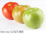 Купить «Три помидора разной степени зрелости», фото № 2927888, снято 23 августа 2011 г. (c) Галина Михалишина / Фотобанк Лори