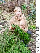 Купить «Женщина с лапками ели для укрывания цветов на зиму», эксклюзивное фото № 2934128, снято 6 ноября 2011 г. (c) Майя Крученкова / Фотобанк Лори