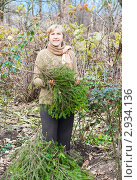 Купить «Женщина с лапками ели для укрывания цветов на зиму», эксклюзивное фото № 2934136, снято 6 ноября 2011 г. (c) Майя Крученкова / Фотобанк Лори