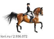 Конный спорт (выездка, пассаж) - молодая девушка на гнедой лошади. Стоковое фото, фотограф Абрамова Ксения / Фотобанк Лори