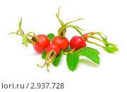 Купить «Плоды шиповника на белом фоне», фото № 2937728, снято 27 августа 2011 г. (c) Ласточкин Евгений / Фотобанк Лори