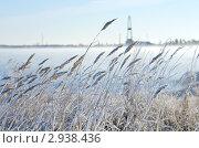 Тростник в инее. Туман над озером. Стоковое фото, фотограф Икан Леонид / Фотобанк Лори
