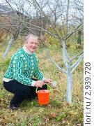 Купить «Побелка плодовых деревьев», эксклюзивное фото № 2939720, снято 6 ноября 2011 г. (c) Майя Крученкова / Фотобанк Лори