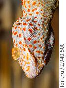 Купить «Ящерица с оранжевыми глазами», фото № 2940500, снято 9 августа 2011 г. (c) Александр Лебедев / Фотобанк Лори