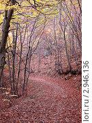 Купить «Дорога, усыпанная опавшими листьями в осеннем лесу», фото № 2946136, снято 28 октября 2011 г. (c) Nickolay Khoroshkov / Фотобанк Лори