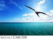 Купить «Альбатрос парит в небе над водами Карибского моря», фото № 2946508, снято 10 ноября 2009 г. (c) Iakov Kalinin / Фотобанк Лори