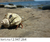 На море. Стоковое фото, фотограф Дмитрий Ведешин / Фотобанк Лори