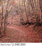 Купить «Тропинка в осеннем лесу», фото № 2948880, снято 28 октября 2011 г. (c) Nickolay Khoroshkov / Фотобанк Лори