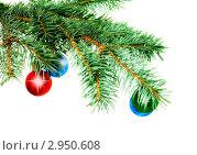 Купить «Новогодние украшения на еловой ветке. Изолировано», фото № 2950608, снято 1 ноября 2009 г. (c) Vitas / Фотобанк Лори