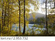 Купить «Золото сентября», фото № 2953732, снято 17 сентября 2011 г. (c) Виктор Ковалев / Фотобанк Лори