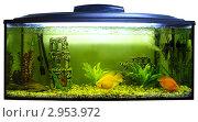 Купить «Аквариум с морскими рыбами, белый фон», фото № 2953972, снято 11 ноября 2011 г. (c) Евгений Ткачёв / Фотобанк Лори