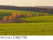 Купить «Осенний пейзаж с полем и лесом», фото № 2960736, снято 22 января 2019 г. (c) Виктор Савушкин / Фотобанк Лори