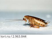 Таракан. Стоковое фото, фотограф herndlhoffer / Фотобанк Лори