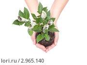 Купить «Денежное дерево. Свернутые доллары среди веток», фото № 2965140, снято 20 мая 2019 г. (c) Гараев Александр / Фотобанк Лори