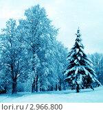 Купить «Зимний пейзаж», фото № 2966800, снято 25 марта 2019 г. (c) ElenArt / Фотобанк Лори