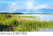 Купить «Берег озера, заросший тростником», фото № 2967952, снято 3 июля 2010 г. (c) Юрий Брыкайло / Фотобанк Лори
