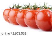 Купить «Ветка томатов черри в каплях воды», фото № 2972532, снято 13 ноября 2011 г. (c) Сергей Прищепа / Фотобанк Лори