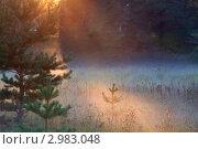 Поле в лучах закатного солнца. Стоковое фото, фотограф Скробова Наталия / Фотобанк Лори