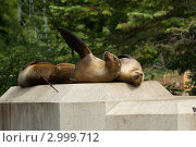 Привет! Стоковое фото, фотограф Виталий Куценко / Фотобанк Лори