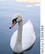 Купить «Белый лебедь», фото № 3004064, снято 22 августа 2011 г. (c) Михаил Ворожцов / Фотобанк Лори