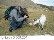 Купить «Коза дереза», фото № 3009204, снято 11 сентября 2011 г. (c) Алена Потапова / Фотобанк Лори