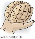 Купить «Рука держит небольшой мозг», иллюстрация № 3013188 (c) Антон Гриднев / Фотобанк Лори