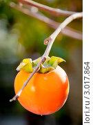 Спелый плод хурмы на дереве. Стоковое фото, фотограф IEVGEN IVANOV / Фотобанк Лори