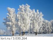 Зимний пейзаж. Деревья в инее. Стоковое фото, фотограф Цибаев Алексей / Фотобанк Лори