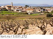 Вид на испанский город с полями из виноградника. Стоковое фото, фотограф valentina vasilieva / Фотобанк Лори