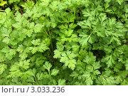Купить «Петрушка», фото № 3033236, снято 7 сентября 2011 г. (c) Корчагина Полина / Фотобанк Лори