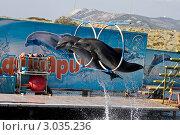 Купить «Утришский дельфинарий. Два дельфина прыгают через обручи», фото № 3035236, снято 23 сентября 2011 г. (c) Вячеслав Беляев / Фотобанк Лори