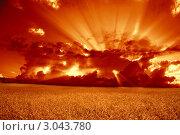 Купить «Поле спелой пшеницы на фоне драматического красного заката», фото № 3043780, снято 3 июля 2009 г. (c) Владимир Мельников / Фотобанк Лори