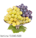 Купить «Гроздья винограда  в  металлической  чаше», фото № 3043920, снято 2 ноября 2011 г. (c) Anka Atanasova Nikolova / Фотобанк Лори